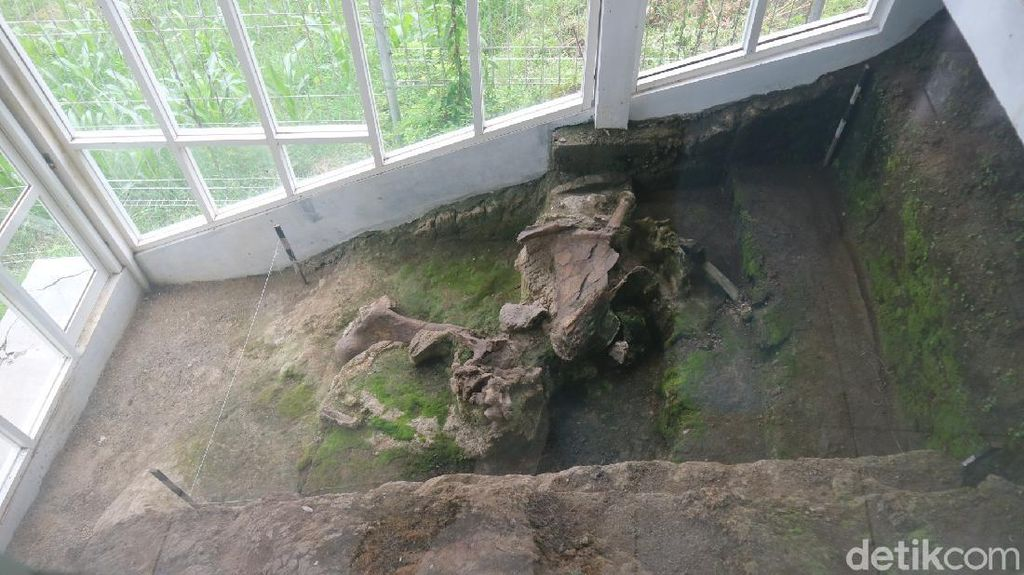 Nyaris Utuh! Ini Penampakan Fosil Gajah Berusia Jutaan Tahun di Kudus