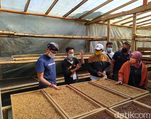 Pegiat kopi Dusun Pengkol, Rinto mengatakan, tanaman kopi ditanam pada tahun 2012 untuk mengurangi tanaman tembakau. Saat itu, kopi yang ditanam petani berkisar 70 ribu pohon. Kemudian, sekarang yang telah berproduksi sekitar 25 ribu hingga 30 ribu pohon. (Foto: Eko Susanto/detikcom)