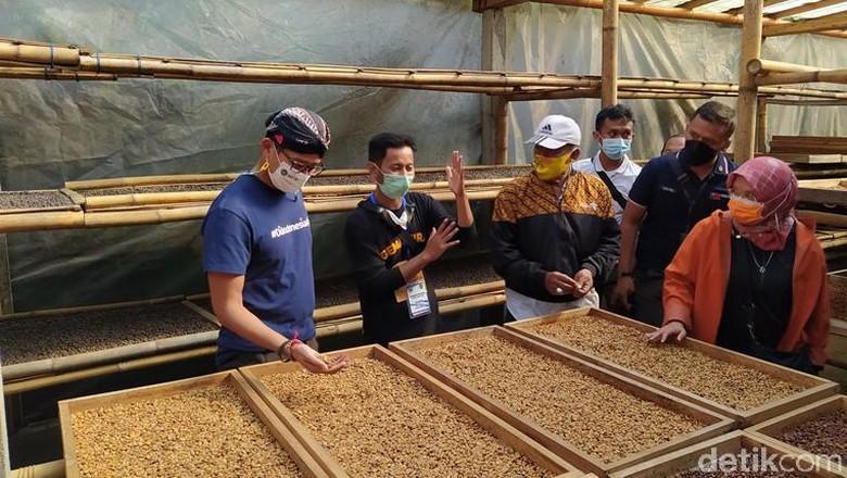 Menparekraf Sandiaga Uno saat melihat pengolahan kopi di Dusun Pengkol Desa Ngawongo, Kecamatan Kaliangkrik, Kabupaten Magelang.