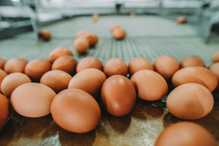 8 Mitos Telur Paling Populer, Kamu Masih Percaya?