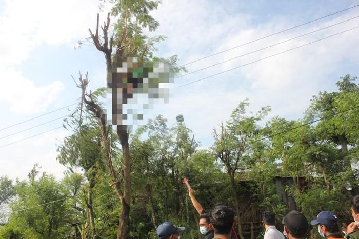 Seorang Petani di Mojokerto Ditemukan Tewas di Atas Pohon Lamtoro