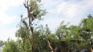 Seorang Petani Mojokerto Ditemukan Tewas di Atas Pohon Lamtoro