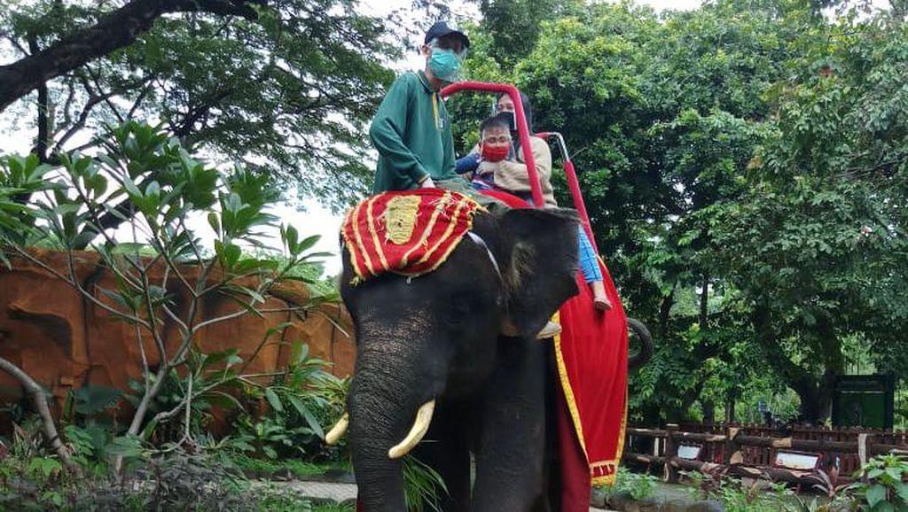 KBS Jadi Tempat Wisata Favorit Warga, Tunggang Gajah Masih Dinikmati