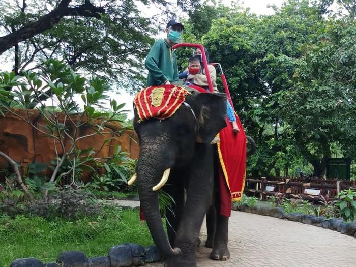 tunggang gajah di kbs