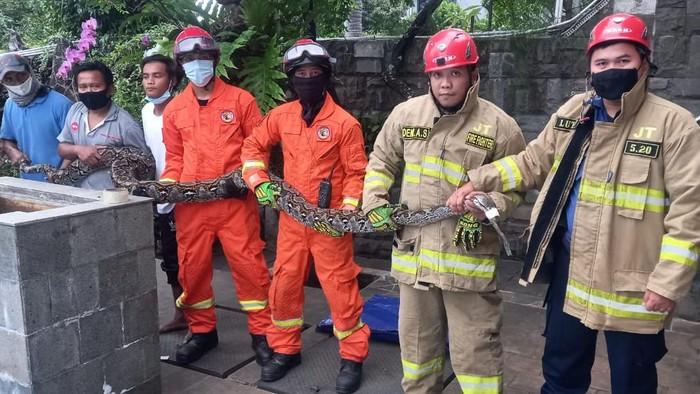 Damkar evakuasi ular sanca 5 meter dari sebuah rumah di Jaktim