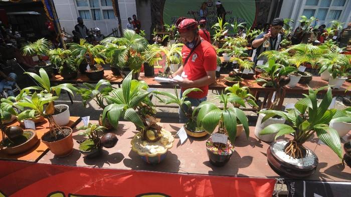 Juri memberi penilaian saat kontes bonsai kelapa di Halaman Kantor Perpustakaan dan Arsip, Pamekasan, Jawa Timur, Minggu (4/4/2021). Silaturrahmi dan kontes bonsai kelapa yang digagas komunitas pecinta bonsai kelapa Pamekasan'Sakera' itu diikui 150 peserta se Jatim. ANTARA FOTO/Saiful Bahri/foc.