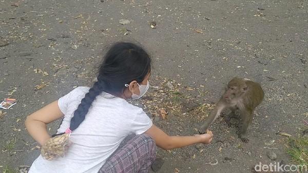 Bahkan ada mitos yang berkembang di rest area ini. Siapapun yang datang memberi makan monyet ekor panjang ini, akan mendapatkan balasan rejeki berlimpah (Robby Bernardi/detikTravel)