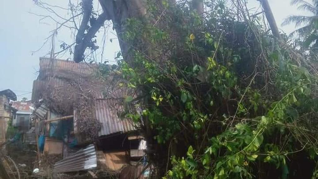 Penampakan Pohon Tumbang Lalu Berdiri Lagi yang Tewaskan Warga Sumut