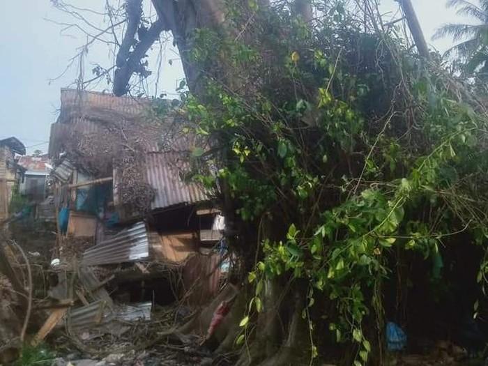 Pohon tumbang berdiri lagi di Tanjungbalai, Sumatera Utara