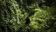 Polisi Australia Selamatkan 2 Pria Bugil yang Tersesat di Hutan