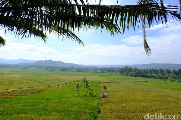 Seperti hamparan sawah dan terasering layaknya di Ubud, Bali. Sawah yang berundak-undak dibelah sungai berbatu yang masih alami membuat traveler tidak ingin segera beranjak.