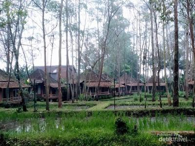 Desa Wisata di Garut, Tidur di Rumah Panggung, Menikmati Suara Jangkrik