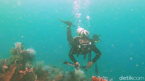 Para penyelam dapat menemui berbagai jenis ikan yang sebelumnya sangat jarang ditemukan. Ikan-ikan yang berwarna warni itu tampak di kedalaman 4 meter di sekitar terumbu karang. Kalau beruntung, bisa ketemu hiu tutul juga di sini (Suriyatman/detikTravel)