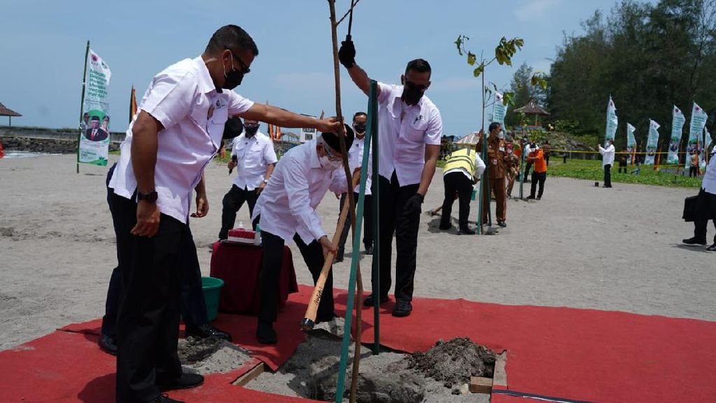 Mitigasi Dampak Tsunami, Wapres Maruf Tanam Pohon di Pantai Kata Sumbar