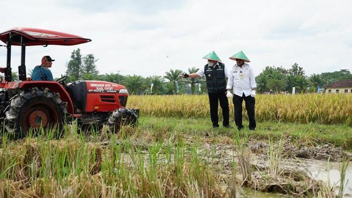 Menteri Pertanian Syahrul Yasin Limpo melakukan panen raya bersama Gubernur Sumatera Selatan (Sumsel) Herman Deru di Desa Srikaton, Buay Madang, OKU Timur