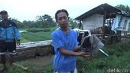 Tiga Petani di Kota Probolinggo Tersambar Petir, Satu Orang Tewas