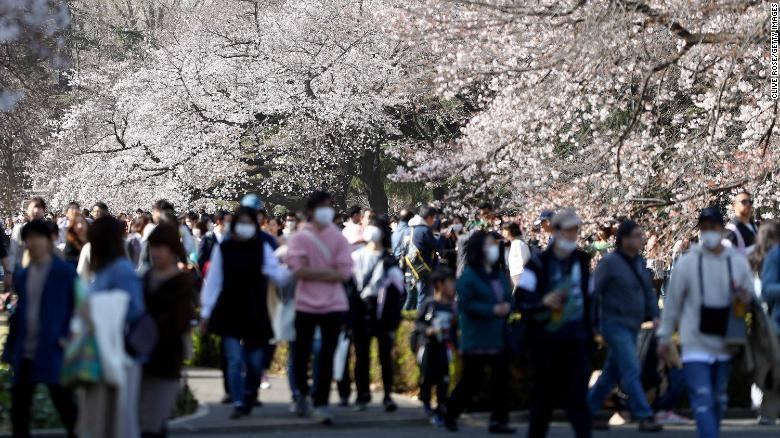 Bunga Sakura Jepang 2021