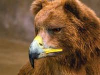 fotoinet beruang edit paruh burung