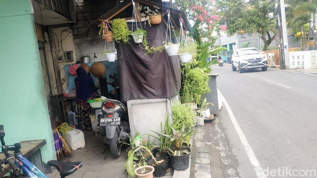 Viral Wanita Berhijab di Bali Beri Makan ke Anjing Tiap Hari