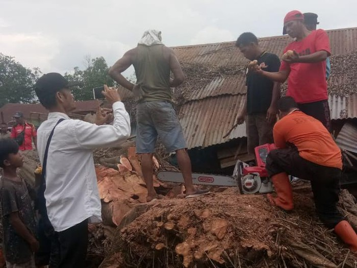 Sebuah pohon berukuran raksasa jenis jabi-jabi tumbang lalu berdiri lagi di Tanjungbalai, Sumatera Utara, hingga menewaskan seorang warga. Pohon ini akhirnya ditebang oleh Badan Penanggulangan Bencana Daerah (BPBD) Tanjungbalai.