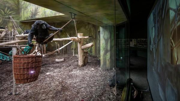 Sayangnya kebun binatang ini belum boleh dibuka untuk umum akibat pandemi.