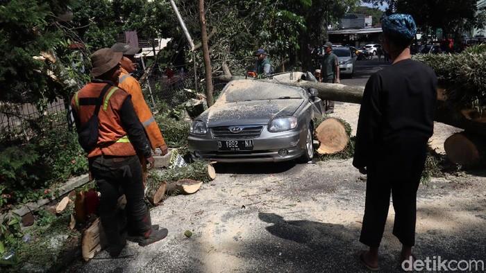 Sebuah pohon berukuran besar di Bandung tumbang. Pohon tersebut tumbang dan menimpa sejumlah kendaraan roda empat.