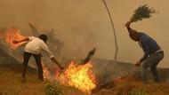 Nepal Dilanda Kebakaran Hutan Terburuk dalam Satu Dekade Terakhir