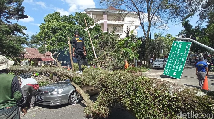 Pohon tumbang di Bandung.