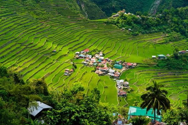 Terasering sawah ini dikenal dengan nama Banaue Rice Terrace.