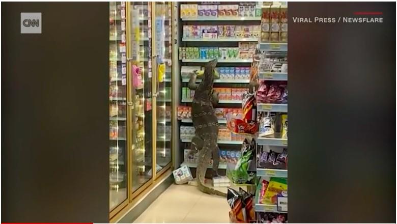 Biawak berukuran cukup besar meneror para pembeli di sebuah outlet 7-11 di Thailand. Dalam sebuah video yang beredar terlihat si biawak memanjat rak tempat aneka macam susu.