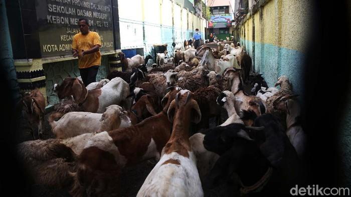 SD Kebon Melati 01, Jakarta Pusat, dipenuhi kambing. Kambing-kambing ini adalah milik pedagang korban kebakaran.