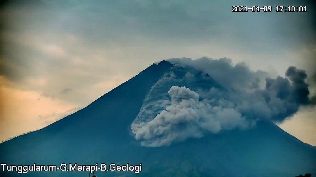 Gunung Merapi Erupsi, Luncurkan Awan Panas Sejauh 1,8 Km