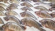 10 Fakta Menarik tentang Ikan Nila yang Harus Diketahui
