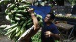 Jelang Ramadhan, Permintaan Pisang di Pasar Kramat Jati Meningkat