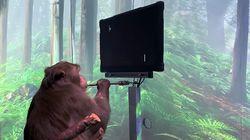 Startup Elon Musk Pamer Monyet Main Game Pakai Kekuatan Pikiran