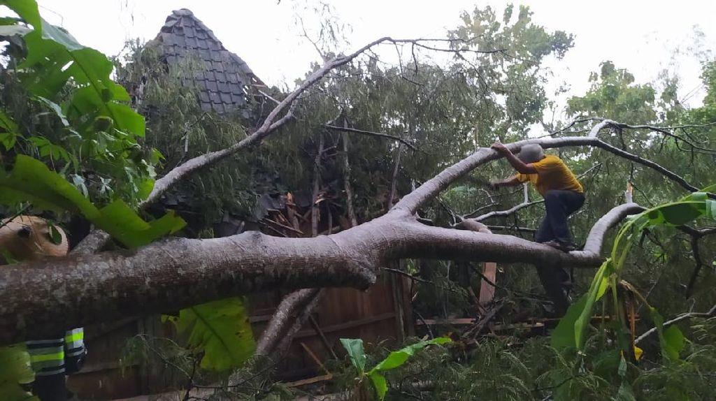 Puting Beliung Terjang Boyolali, Pepohonan Tumbang Timpa Rumah Warga