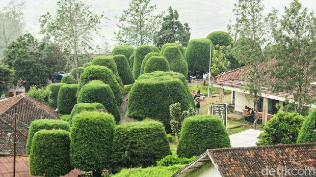 Bukit Jamur Rancabolang di Bandung Selatan