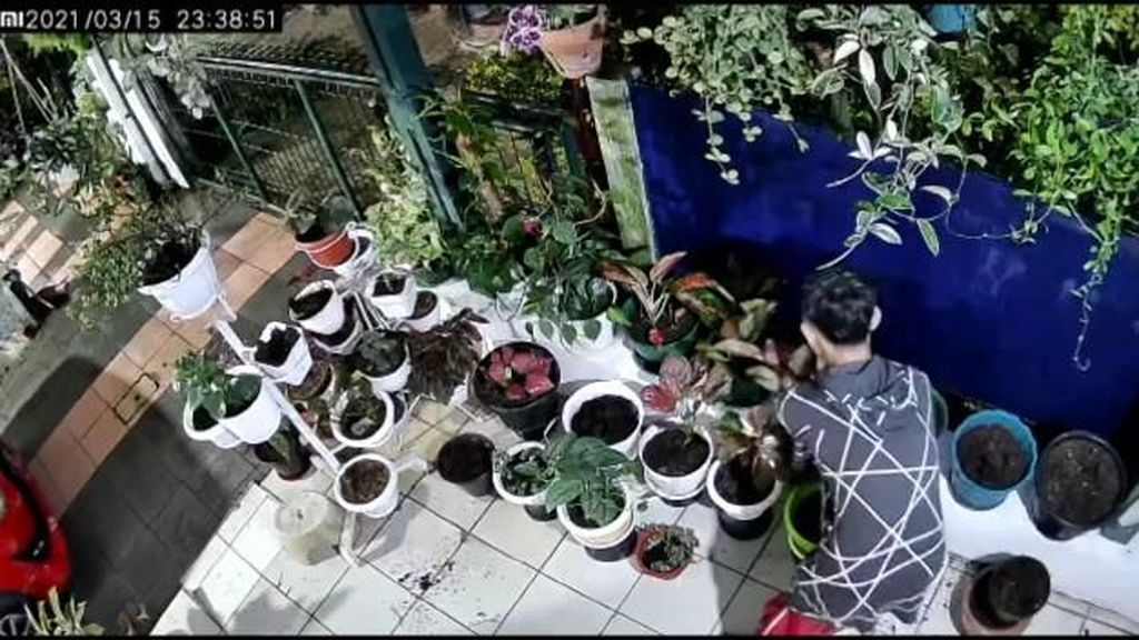 Aksi Santuy Pencuri Terekam CCTV: Gasak Bunga hingga Gondol Sandal