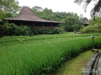 Foto: Rekomendasi Villa Cantik Tepi Sawah di Ungaran