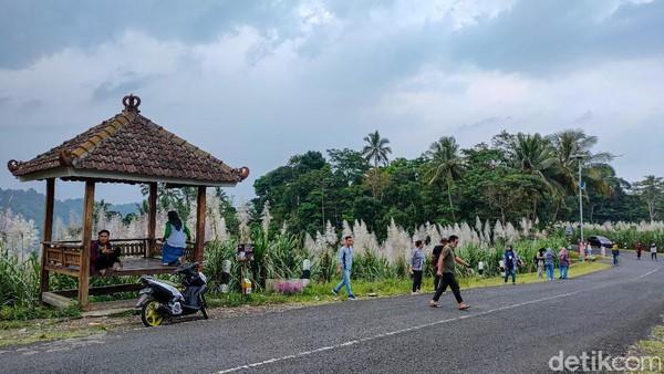 Dari pusat Kota Jogja, jaraknya sekitar 30 Km atau satu jam perjalanan menggunakan kendaraan bermotor. Jalan menuju ke Kebun Tebu Gendu tergolong bagus, namun agak berbukit dan cukup curam. (Jalu Rahman Dewantara/detikTravel)