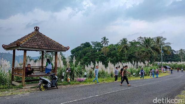 Kebun tebu Gendu, Kulon Progo