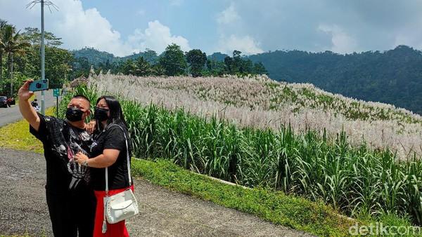 Kebun tebu ini berada di atas tanah kas Desa Jatimulyo yang disewa PT. Madukismo, perusahaan pembuat gula yang bertempat di Bantul. Untuk menikmati pemandangan di Kebun Tebu Gendu, pengunjung untuk sementara waktu tidak dipungut biaya, alias gratis. (Jalu Rahman Dewantara/detikTravel)