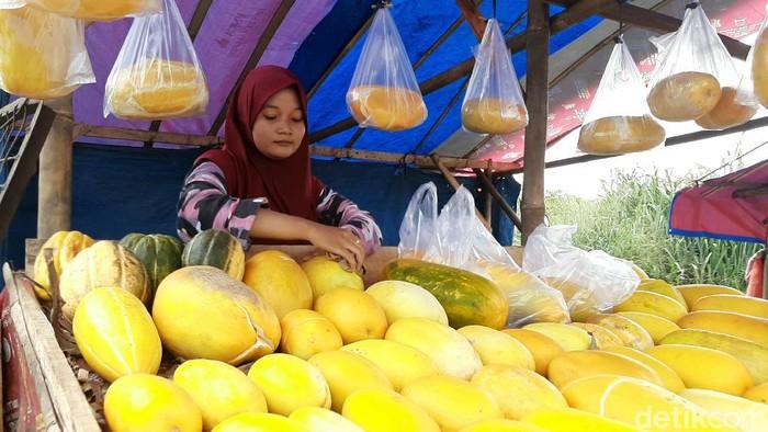 Timun suri jadi buah favorit saat bulan Ramadhan karena kerap dijadikan menu buka puasa. Pedagang timun suri pun mulai bermunculan jelang Ramadhan di Bogor.