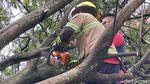 Waduh, 3 Mobil Rusak Tertimpa Pohon Tumbang di Bandung