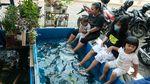 Wuih, Ada Kebun Binatang Mini di Kelurahan Karet Jaksel