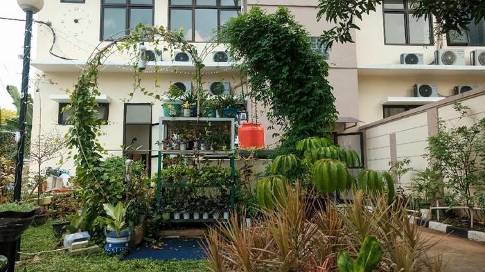 Kelurahan Karet di Jaksel menata halaman belakang kantor dengan berbagai tanaman dan hewan, Senin (12/4/20210).