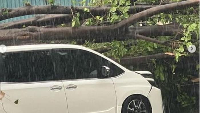Mobil yang ditumpangi Erros Djarot tertimpa pohon tumbang