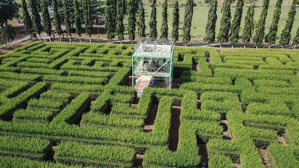 Objek wisata ini menyuguhkan permainanan taman labirin dari tanaman alami dengan keindahan pemandangan alam.