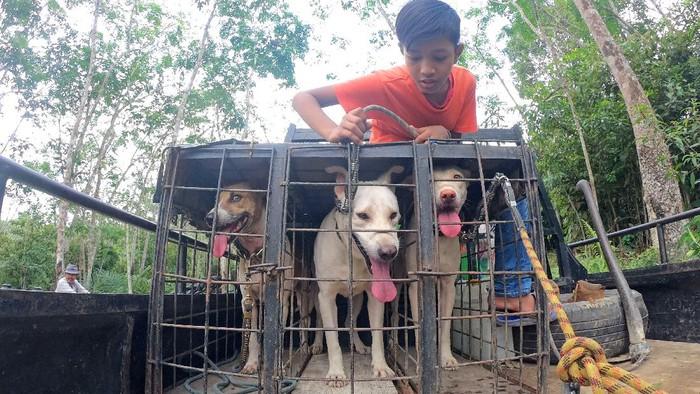 Peserta olahraga berburu babi membawa anjing peliharaannya saat berburu,  di Nyogan, Muarojambi, Jambi, Minggu (11/4/2021). Kegiatan mingguan yang diinisasi Forum Olahraga Berburu Babi (FORBI) setempat dan diikuti puluhan peserta tersebut bertujuan mengurangi populasi hama babi yang merusak kawasan perkebunan. ANTARA FOTO/Wahdi Septiawan/hp.