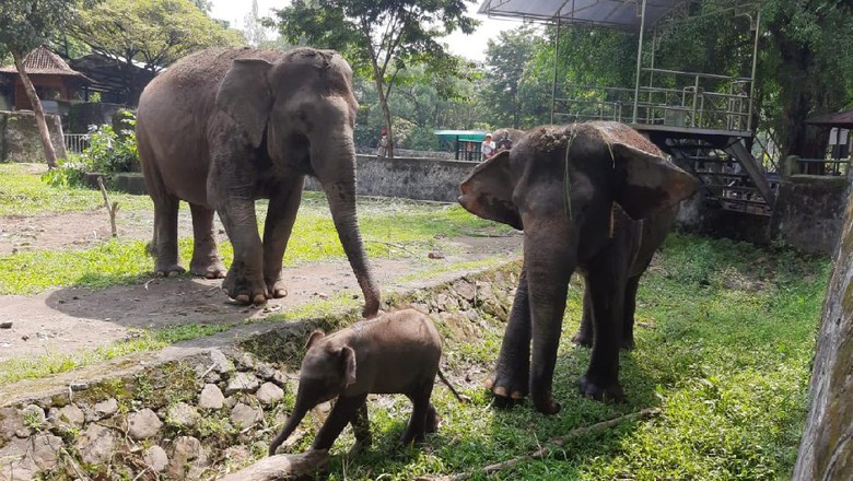 Suasana di Gembira Loka Zoo